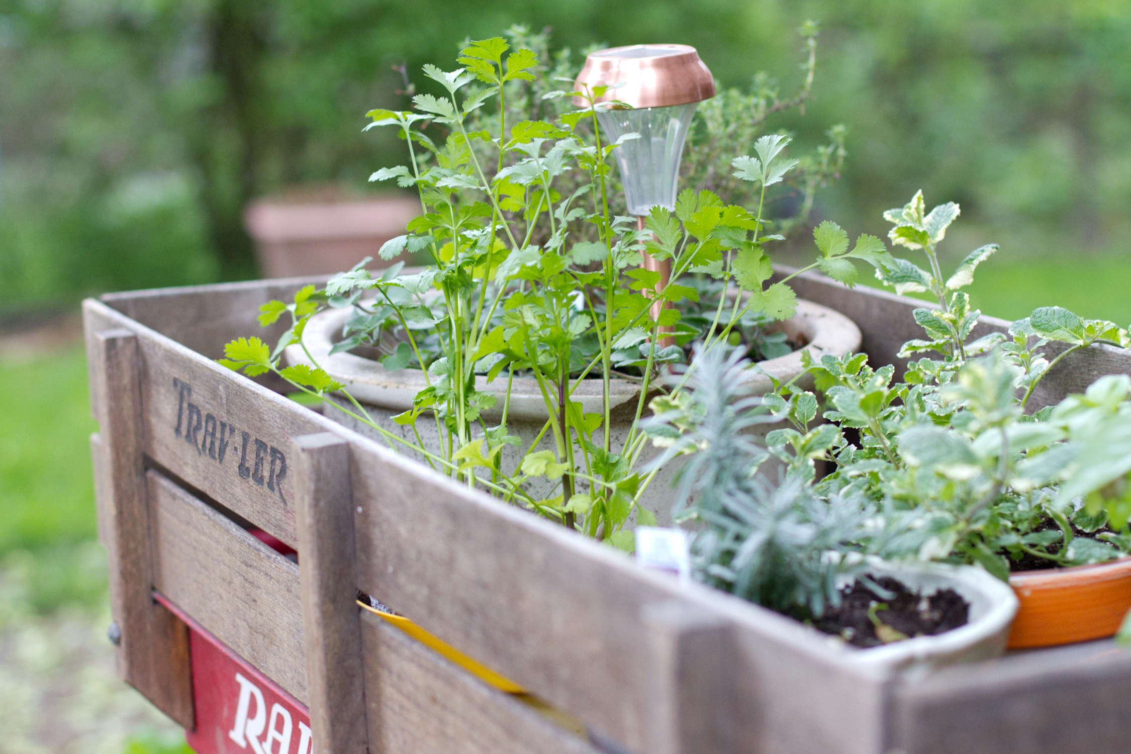 Radio Flyer Herb Garden