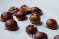 Chestnut-6
