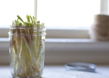 pickled ramps-18