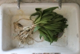 pickled ramps-7